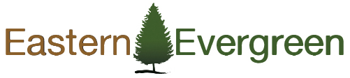 Eastern Evergreen